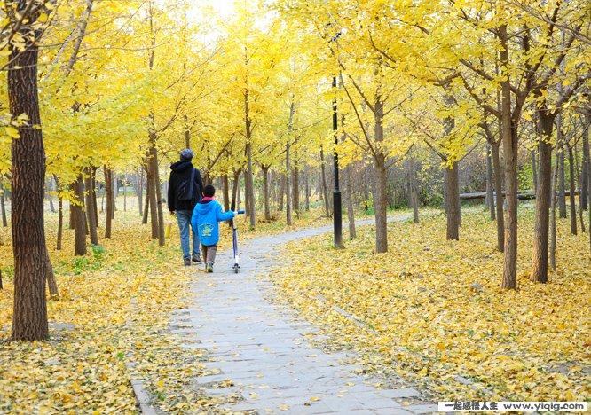 描写秋天的词语